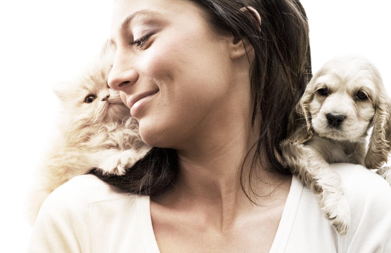 dicas para adoção de cães e gatos