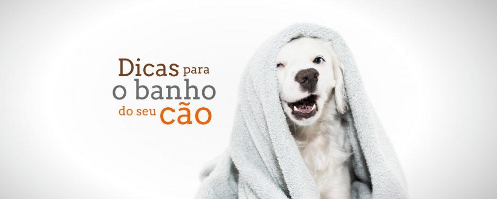 dicas para o banho do seu cão