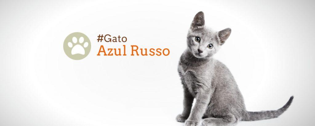 Guia de Raças: Gato Azul Russo